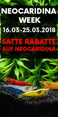 Neocaridina Week