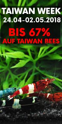 Taiwan Week Angebote