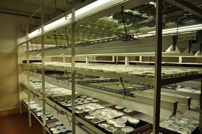 in vitro wasserpflanzen kaufen garnelen kaufen im. Black Bedroom Furniture Sets. Home Design Ideas