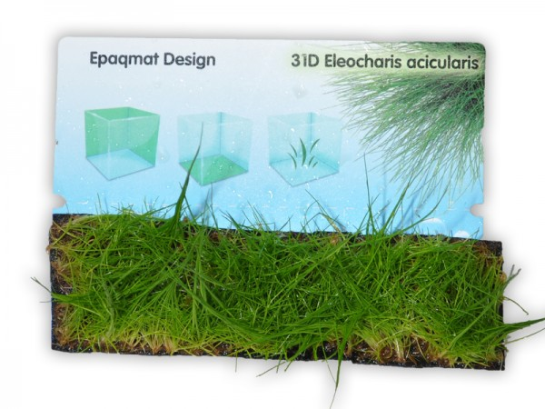 Pflanzenmatte Eleocharis acicularis Nadelsimse 4 x 13 cm