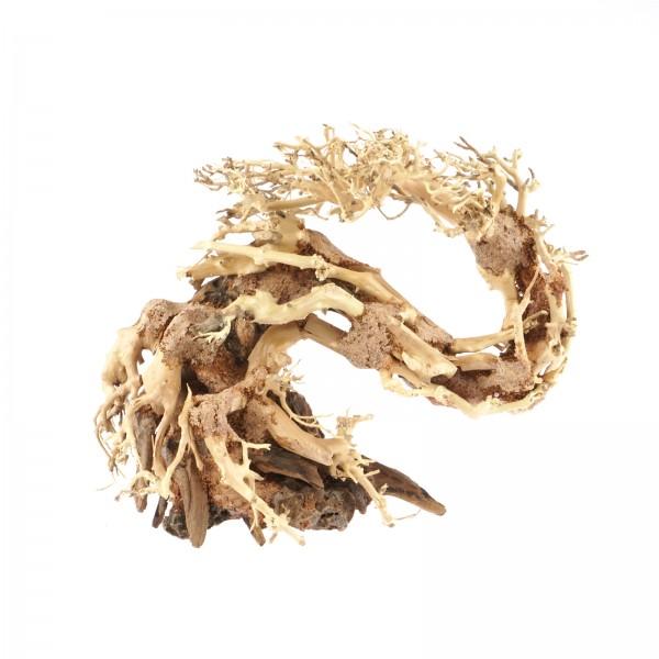 Drachen-Bonsai Baum