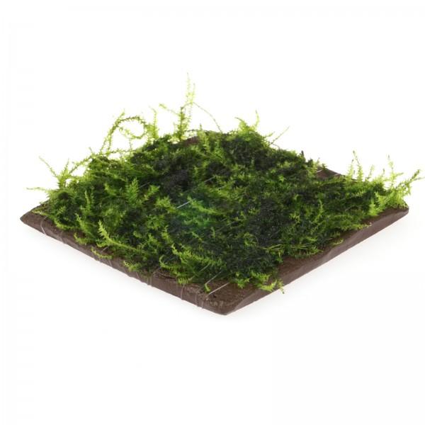 Pflanzenplatte viereck schwarz mit diversen Moosen