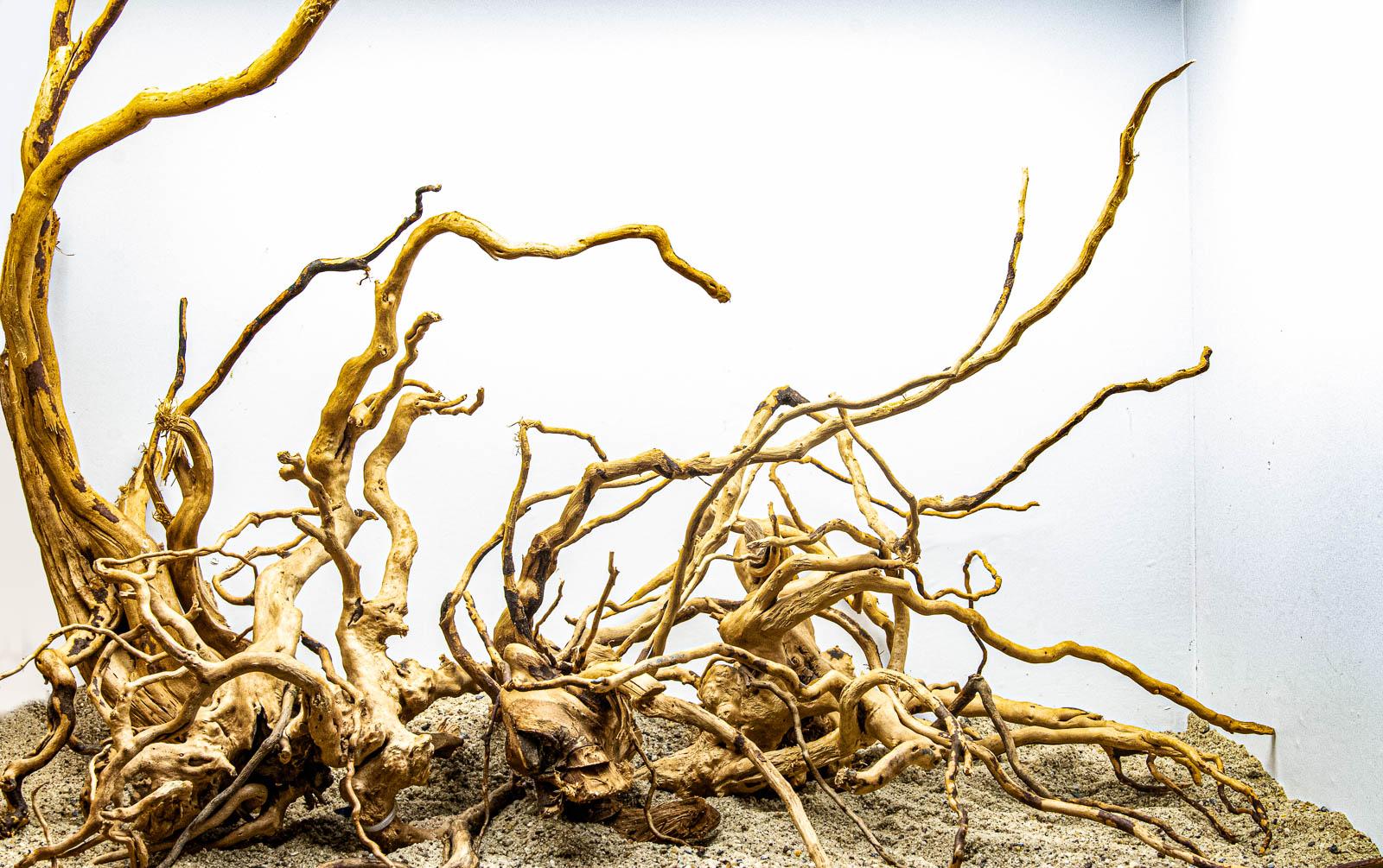 Spiderwood, Fingerwurzel oder rote Moorkien