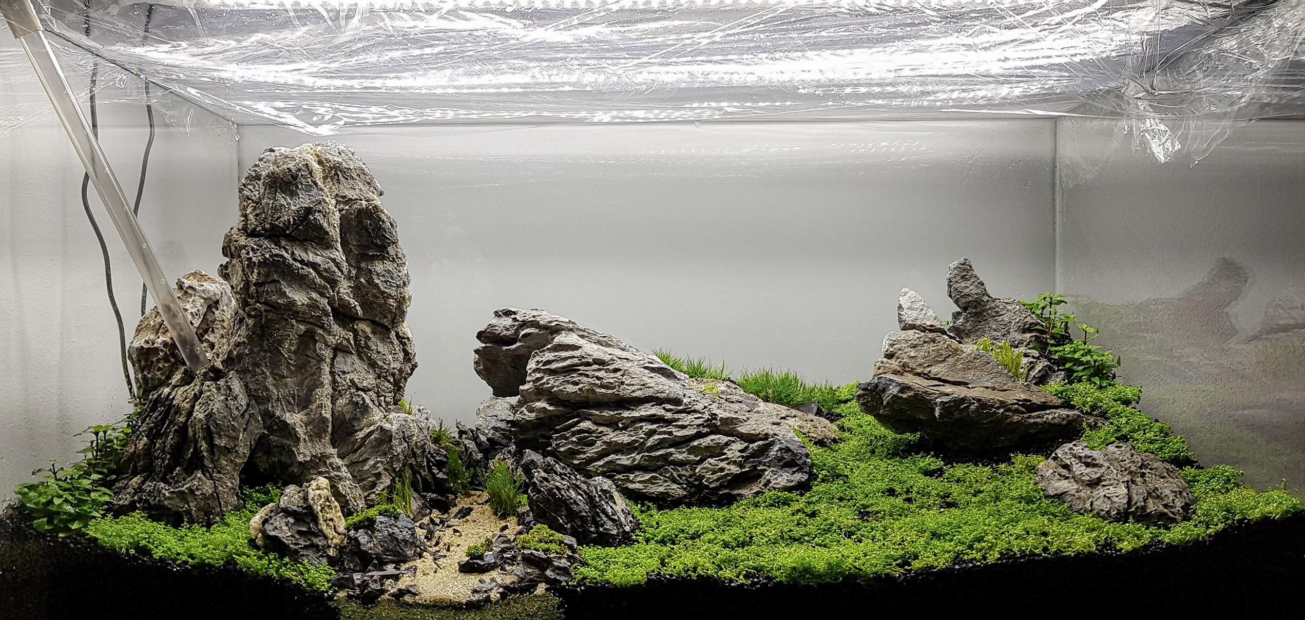 Ein Aquascape im Dry Start unter Folie