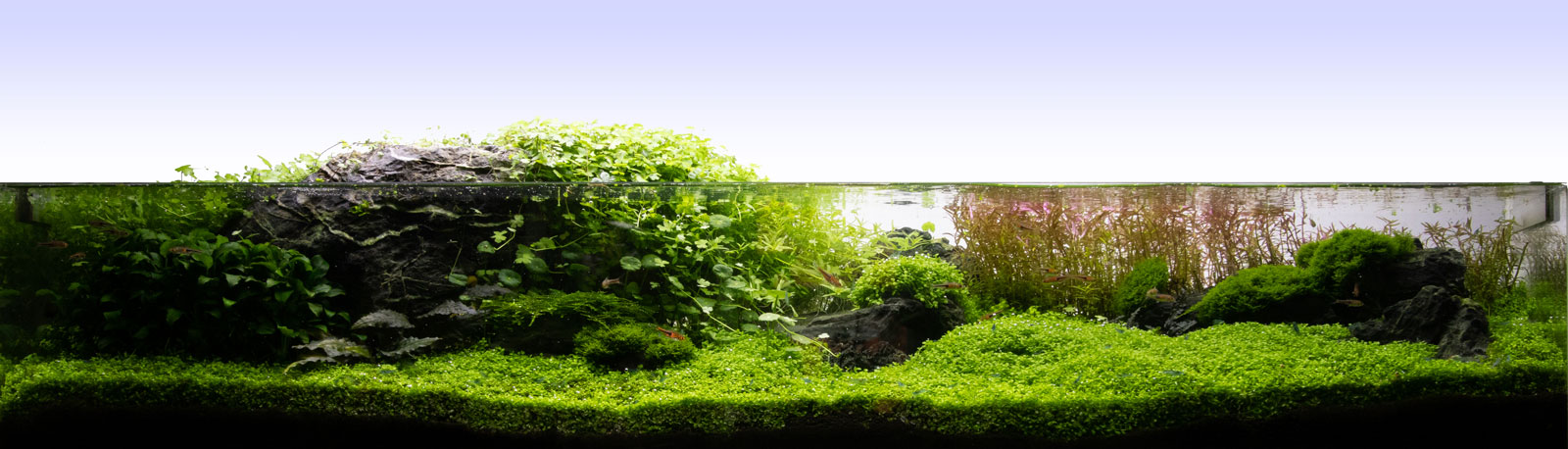 Flaches Aquascape 120x30x20 CM