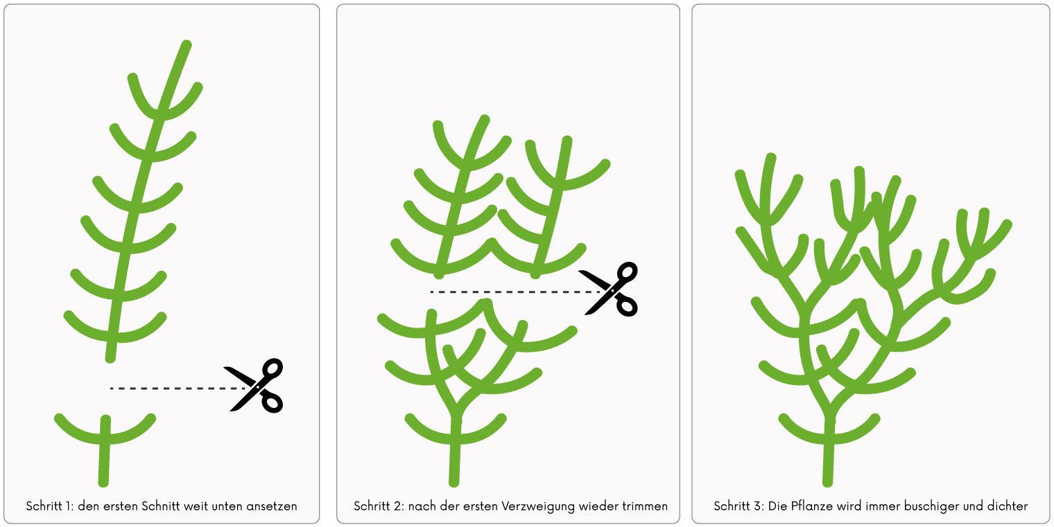 Stengelpflanzen richtig schneiden