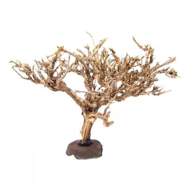 Nano Deko Baum Bonsai S Garnelenbaum