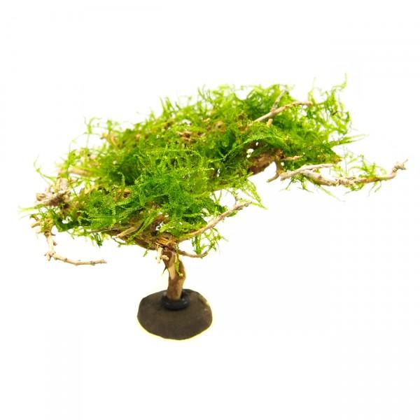 Nano Deko Baum Bonsai S Garnelenbaum mit Moos