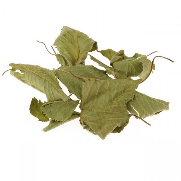 Wildkirschblätter grün