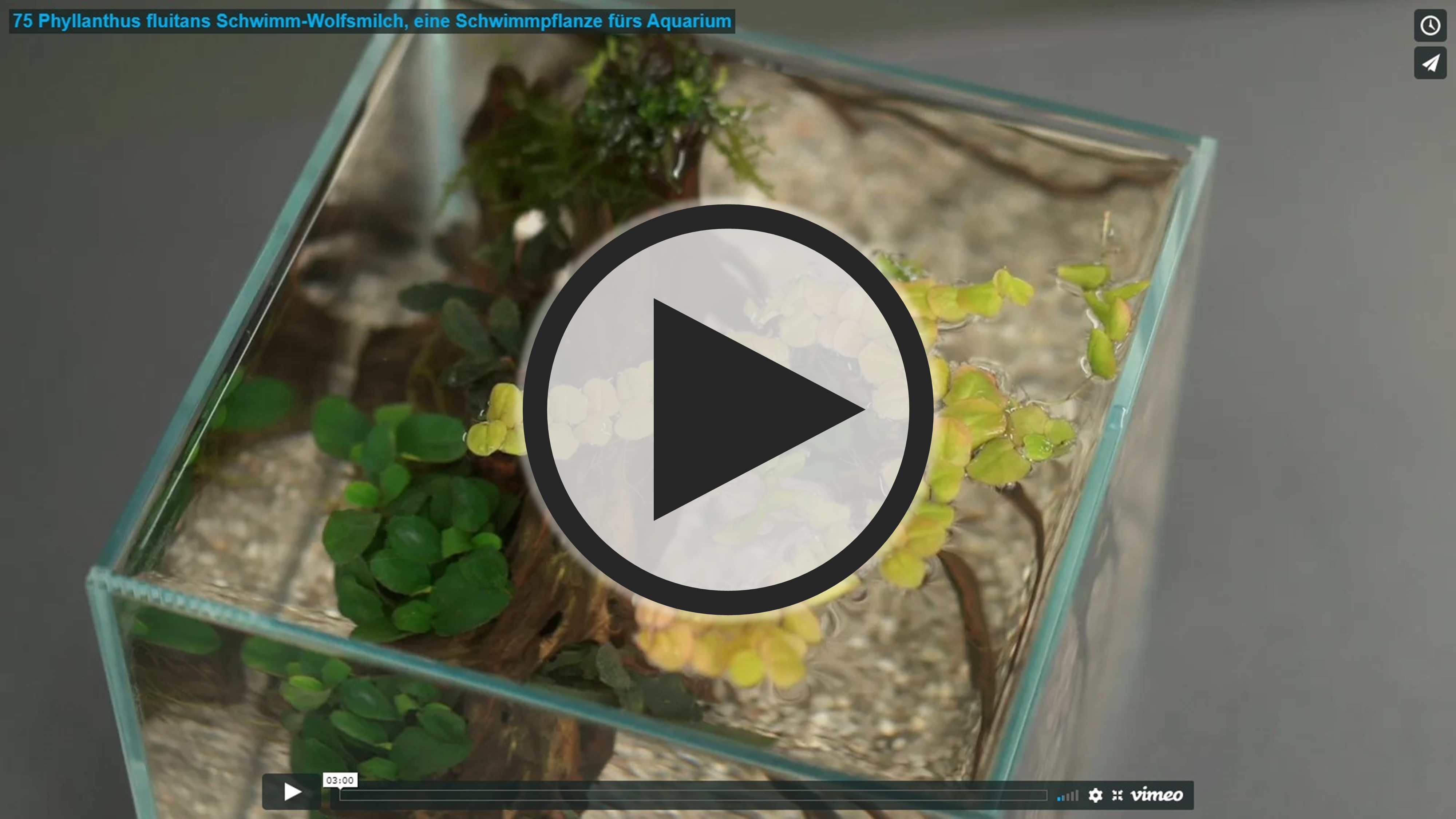 Vorschau: Video