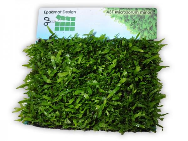 "Pflanzenmatte Microsorum pteropus minor ""thin leaves"" 16,5 x 13 cm"
